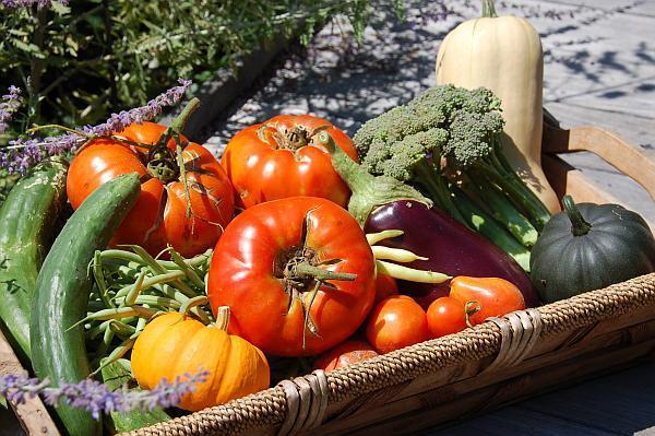 legume de august