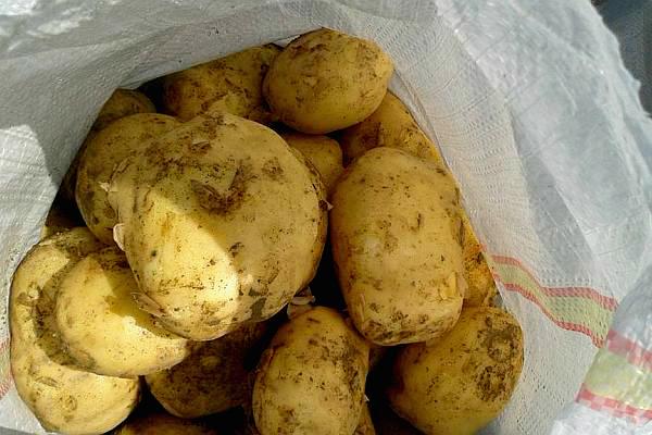 pret cartofi 2015