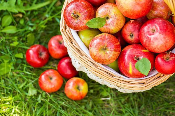 Apple-Picking-CCM