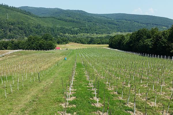 plantatie de goji fonduri europene