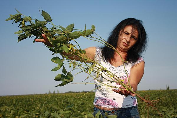 hibrid de soia adus din SUA de Procera