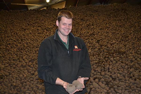 productie mare hectar cartofi