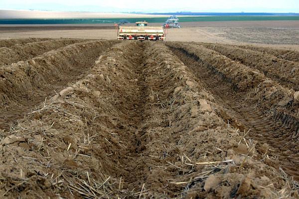 suprafata cultivata cu cartofi