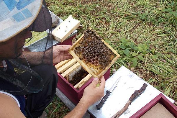 apicultor Cosmin Mesesan