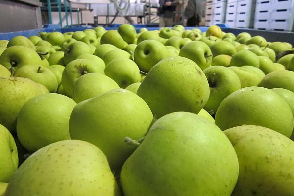 export de mere polonia