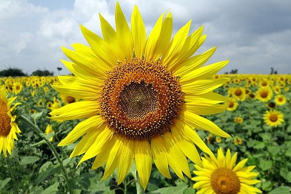 flower-204161_640