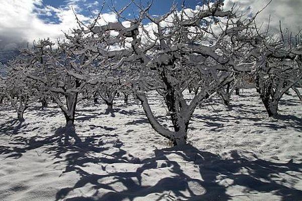 livada-iarna-februarie