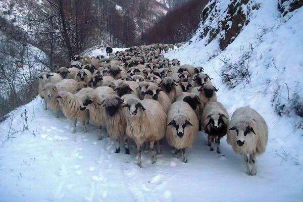 turma de oi in ianuarie