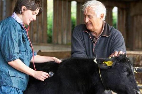 veterinar-fermier