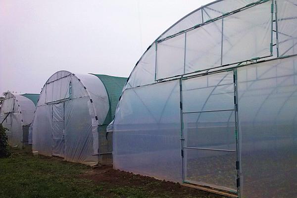 solarii de legume