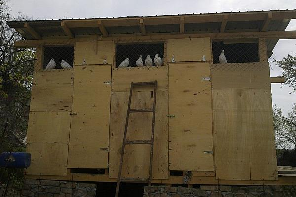 adapost porumbei voiajori
