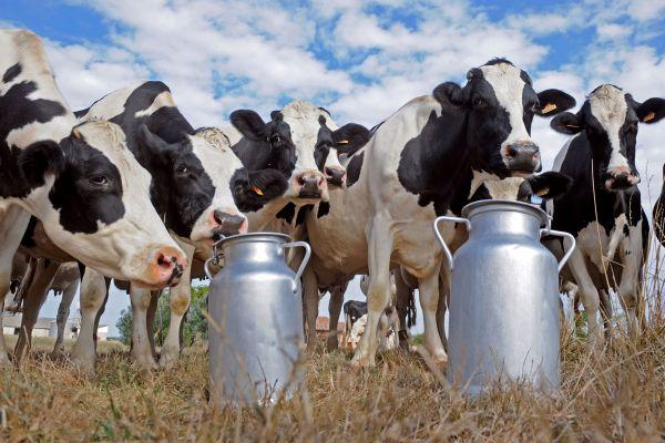 lapte-din-ferma