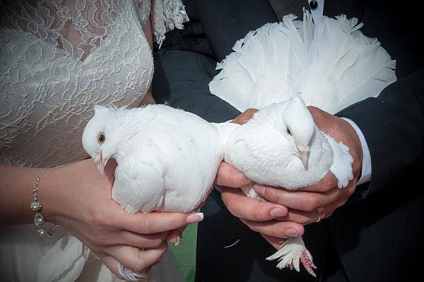 porumbei albi la nunta