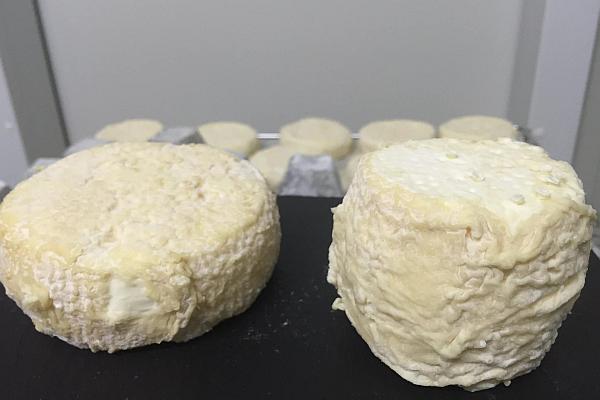 branzeturi din lapte de capra