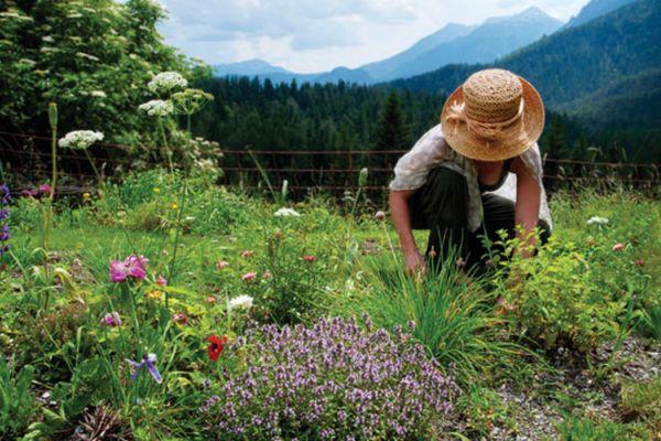 plante-medicinale-subventie