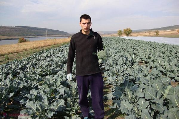 fermier broccoli