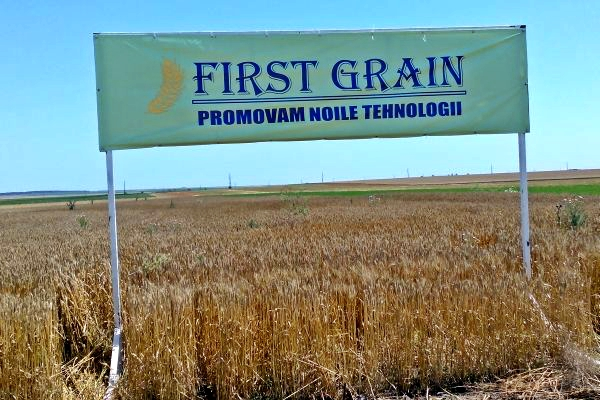 First Grain Romania Constanta Amzacea
