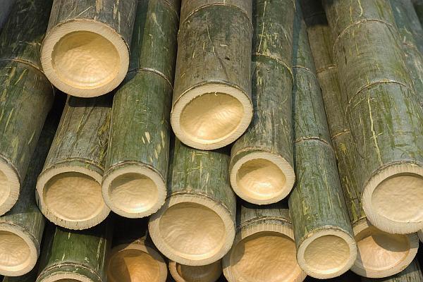 lemn de bambus recoltat