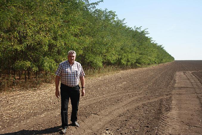 Gheorghe Albu la perdelele sale forestiere din salcam