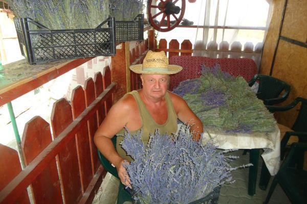 Ioan Iakob cultura de lavanda