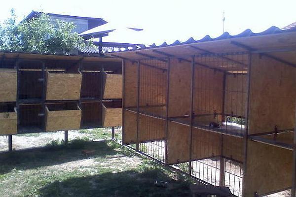 cusca iepuri Romania