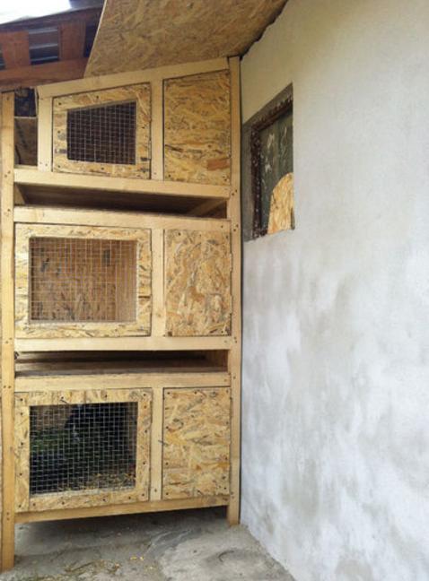 cusca iepuri lipita de perete