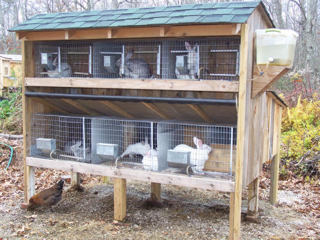 custi de iepuri