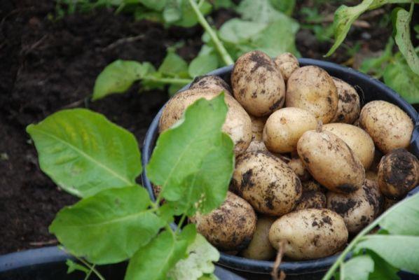 eveniment cartof neamt 2016