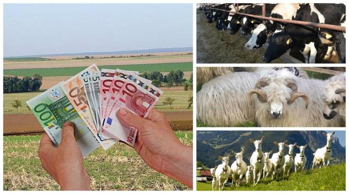 Teren Agricol Subventii Cat  Lista