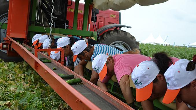 masina pentru recoltat castraveti