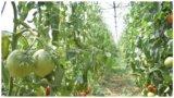 Primarul din Matca: Cărările din solar nu se scad la măsurătorile din Programul Tomata!