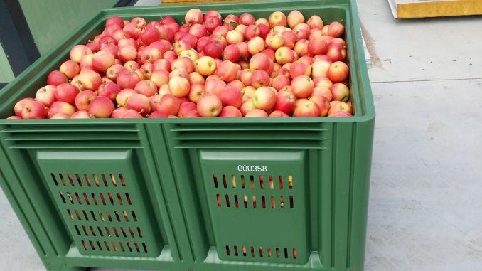 Depozitarea fructe in boxpaleti