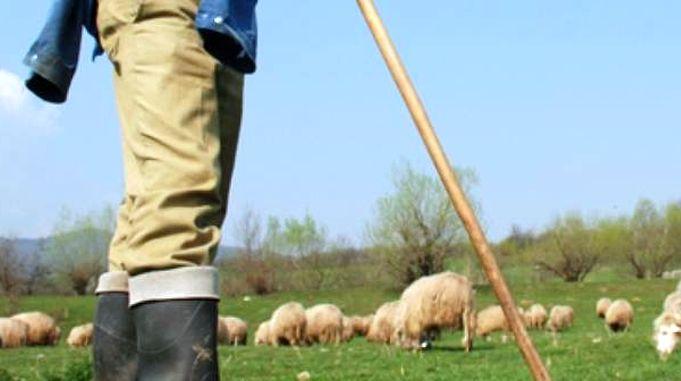 Cioban cu oile