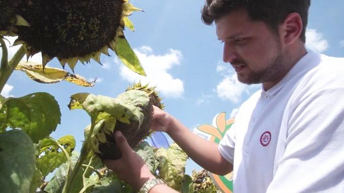 Mihai Dragoi fermier