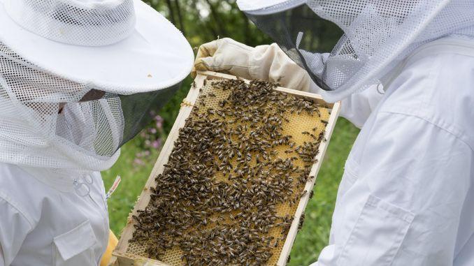 Plati APIA apicultori