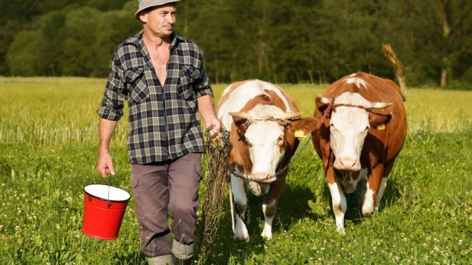 Subventii bovine de lapte APIA