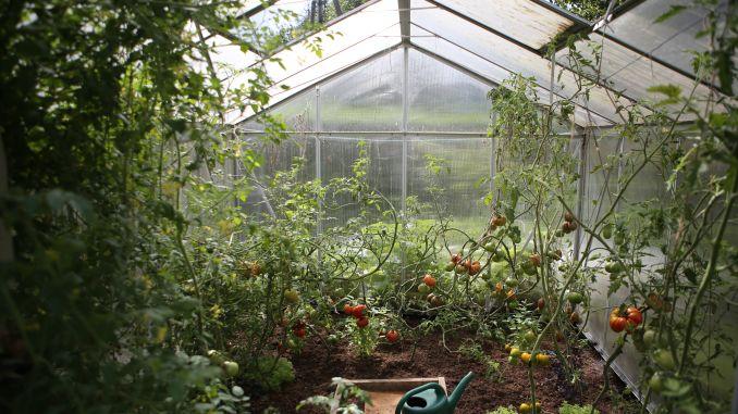 clasificarea legumelor