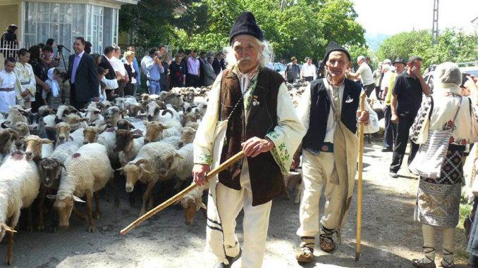 Ciobani in vasta cu oile