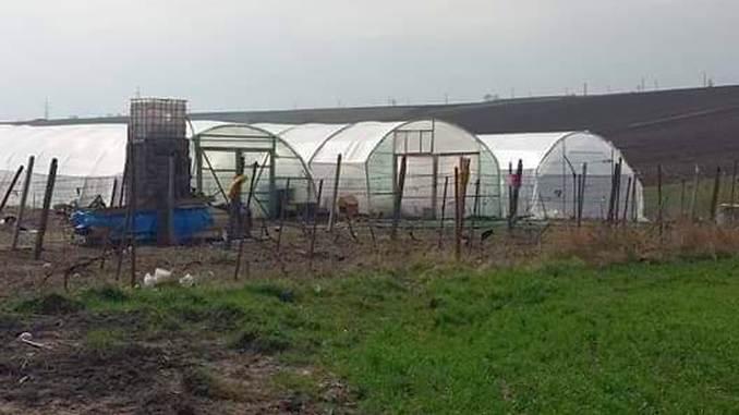 Solar de legume Dorohoi