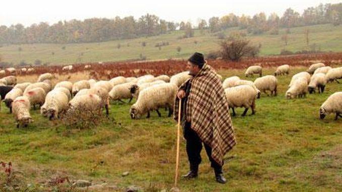 Cioban la stana cu oile