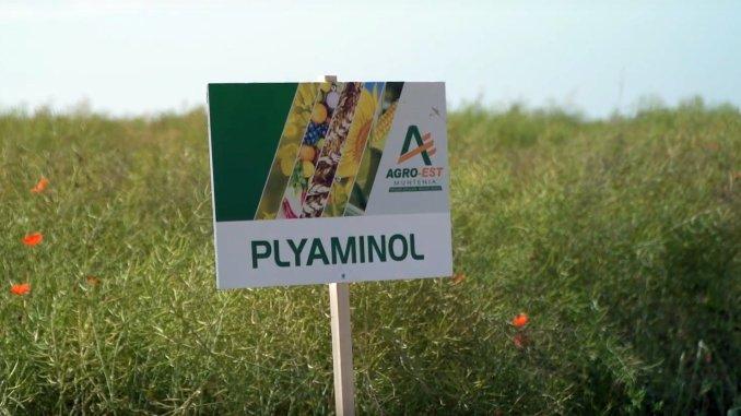 Plyaminol Agro Est Muntenia