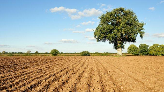 Agrostar Constanta se imprumuta pentru a cumpara teren agricol