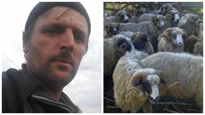 Dorel Bora creste 600 de oi
