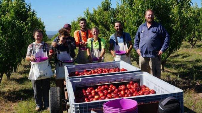 Locuri de munca agricultura