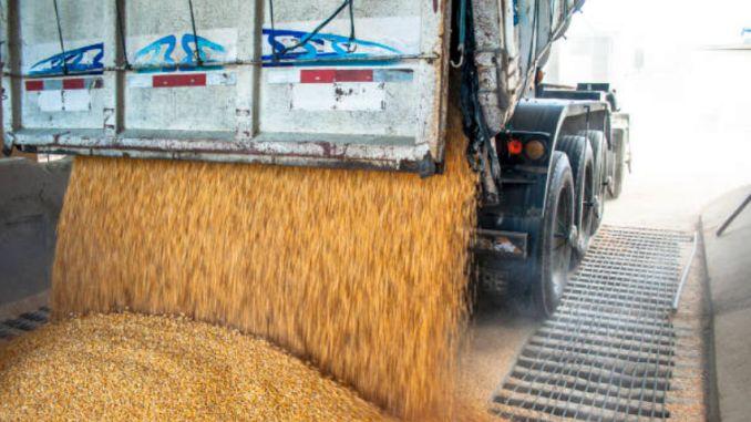 Transport cereale porumb camion