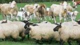 Subvenții APIA: Lista cu crescătorii de animale aflați la control în fiecare județ!