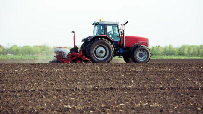 Semanat porumb agricultura