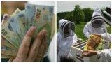 Ajutor de minimis pentru apicultură: 25 de lei/familia de albine! Cererile se depun până pe 31 august 2020!