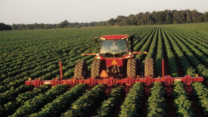 Soia - planta minune pentru agricultura românească!