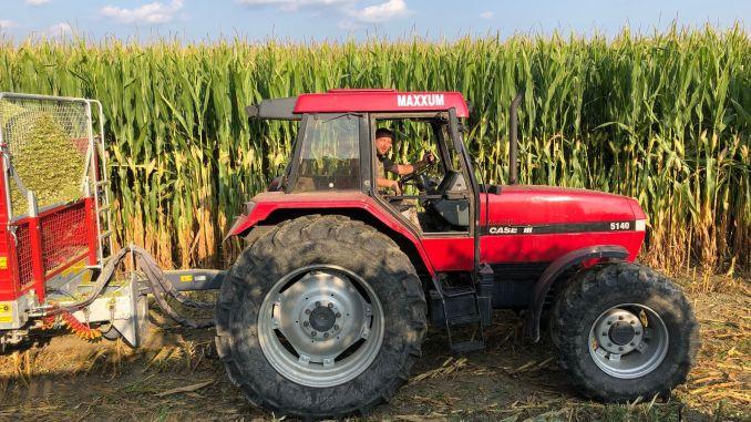 Fermierii Kiss Sandor și Kis Cs Csaba 80 t/ha, a fost obținută cu acest hibrid în localitatea Cristuru Secuiesc, județul Harghita .